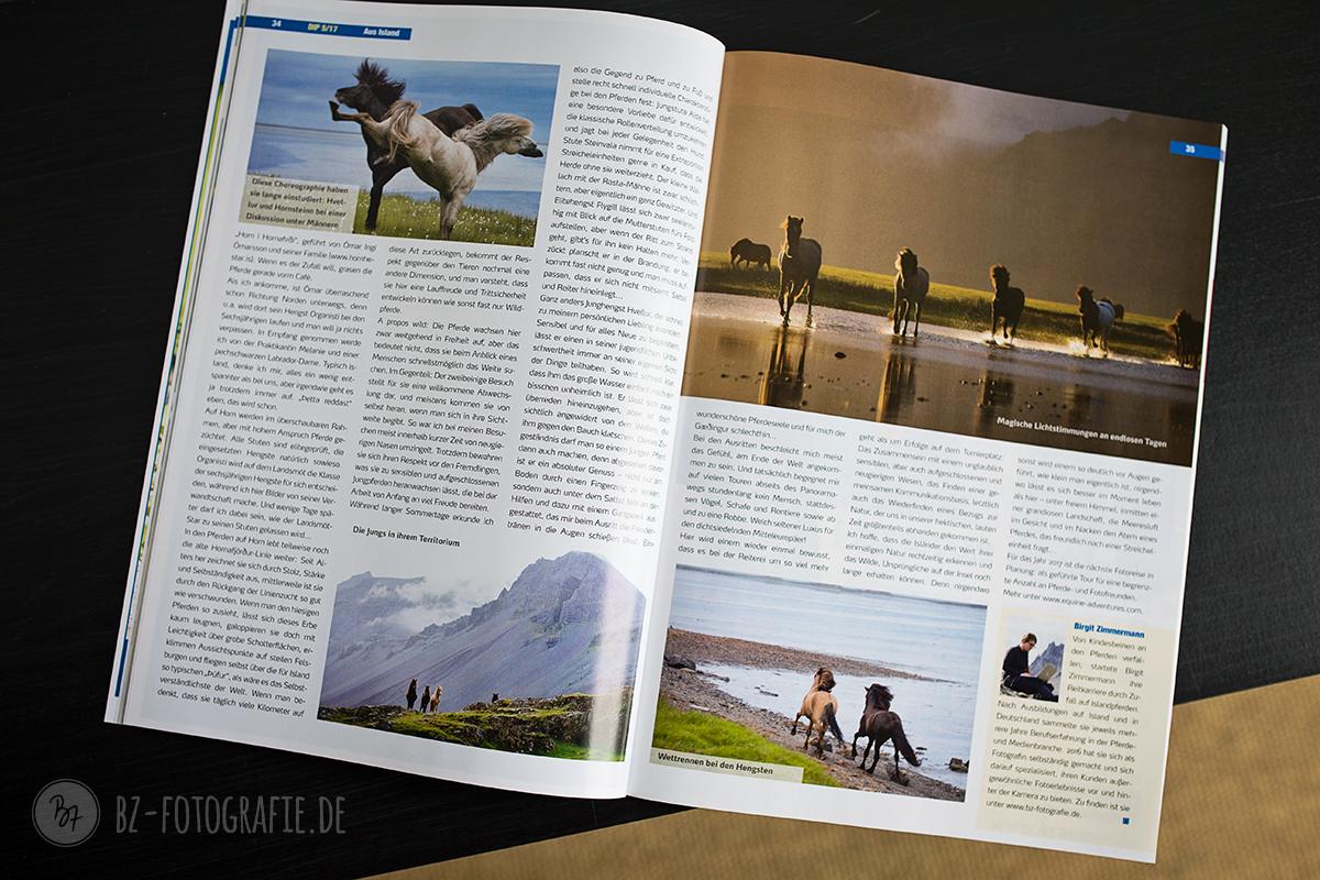 artikel-islandpferd-0516-2