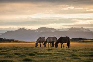15-island-pferde-sonnenuntergang-015