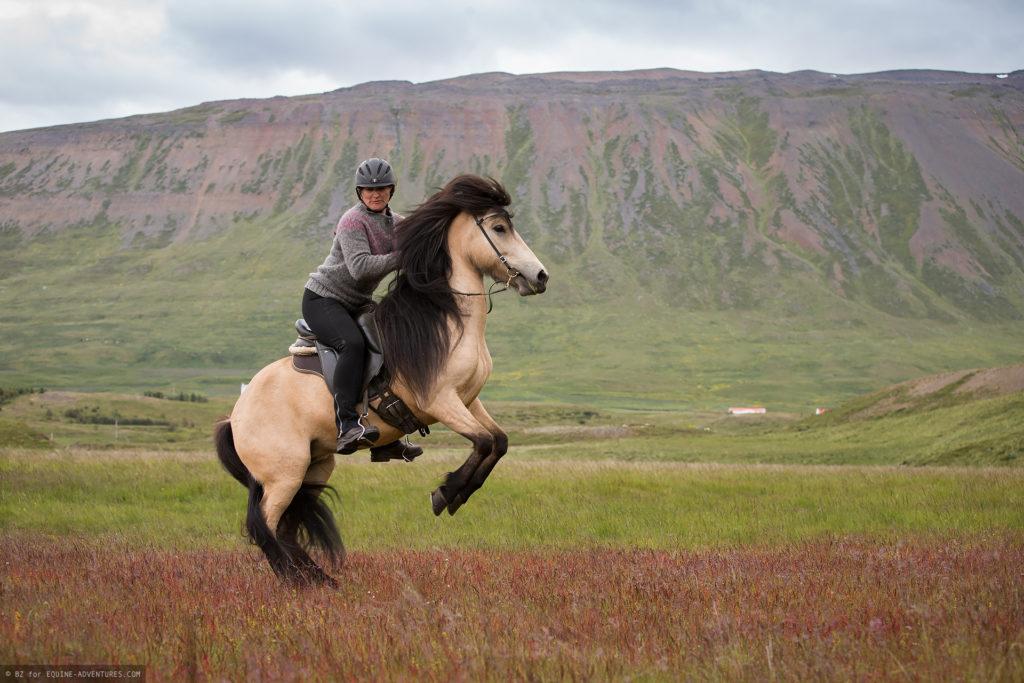 ea-fotoreise-island-frau-pferd-steigend