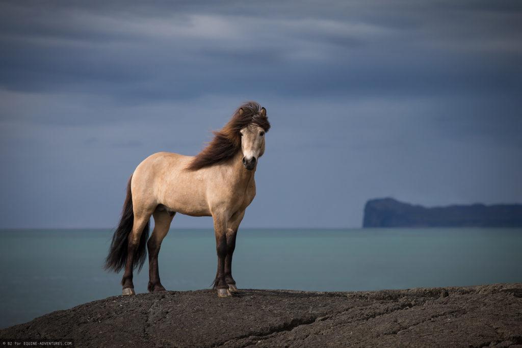 ea-fotoreise-island-hengst-fels-meer