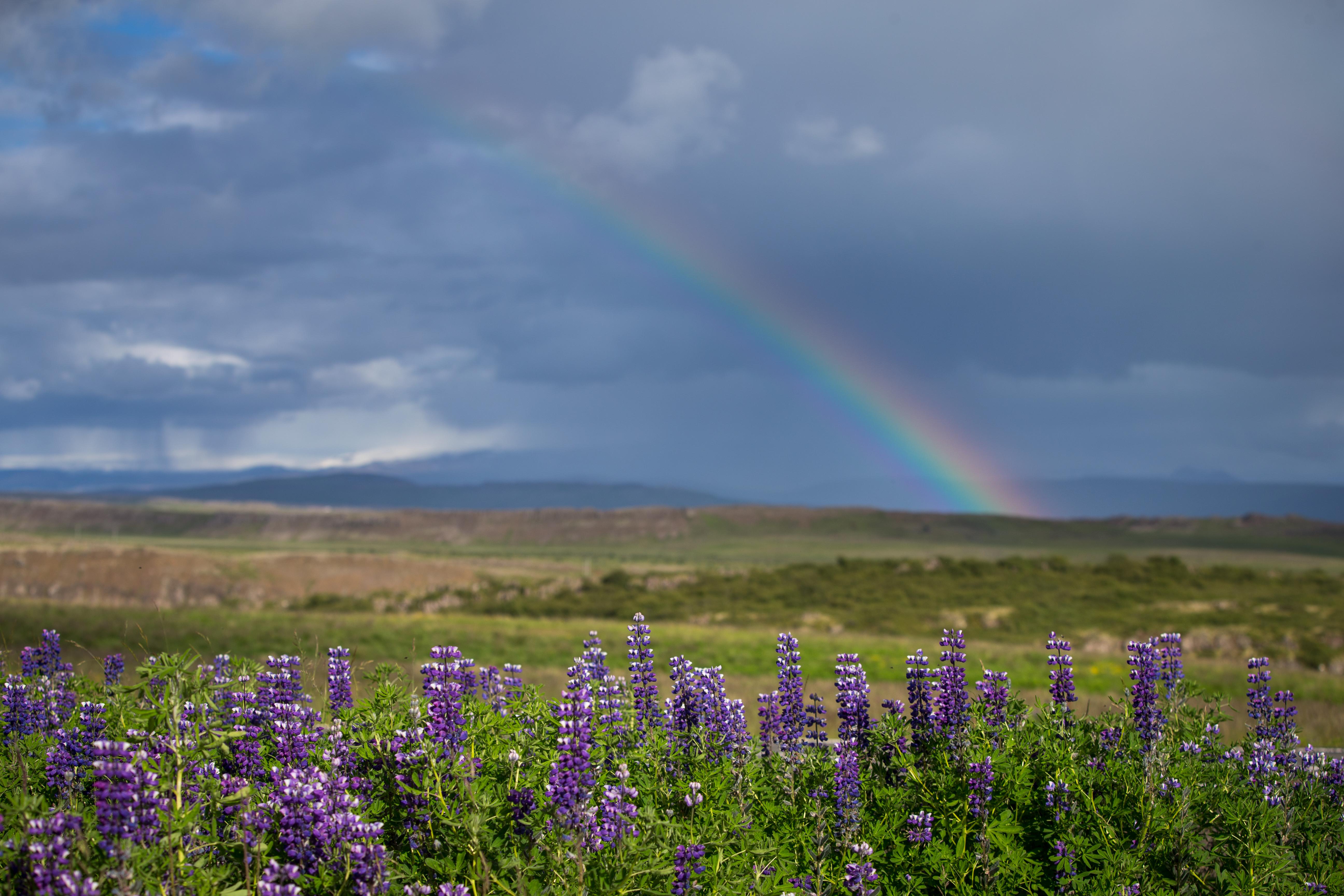 ea-fotoreise-island-regenbogen-lupinen