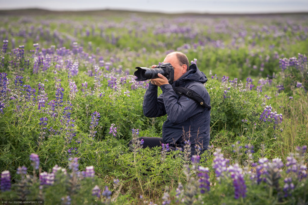 ea-fotoreise-island-teilnehmer-lupinen