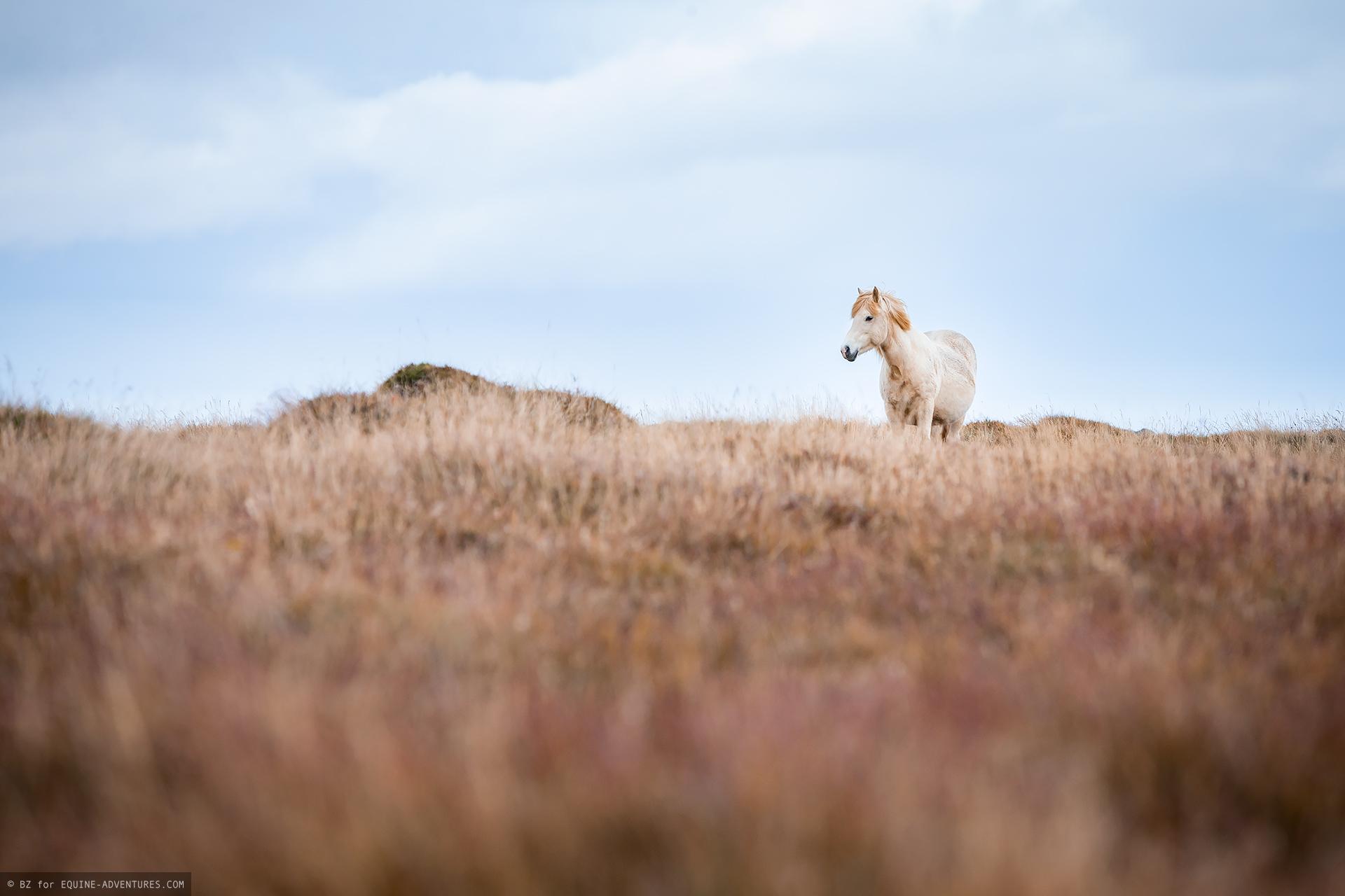 Zu Besuch Bei Den Wildpferden Auf Island Fototour Island Herbst