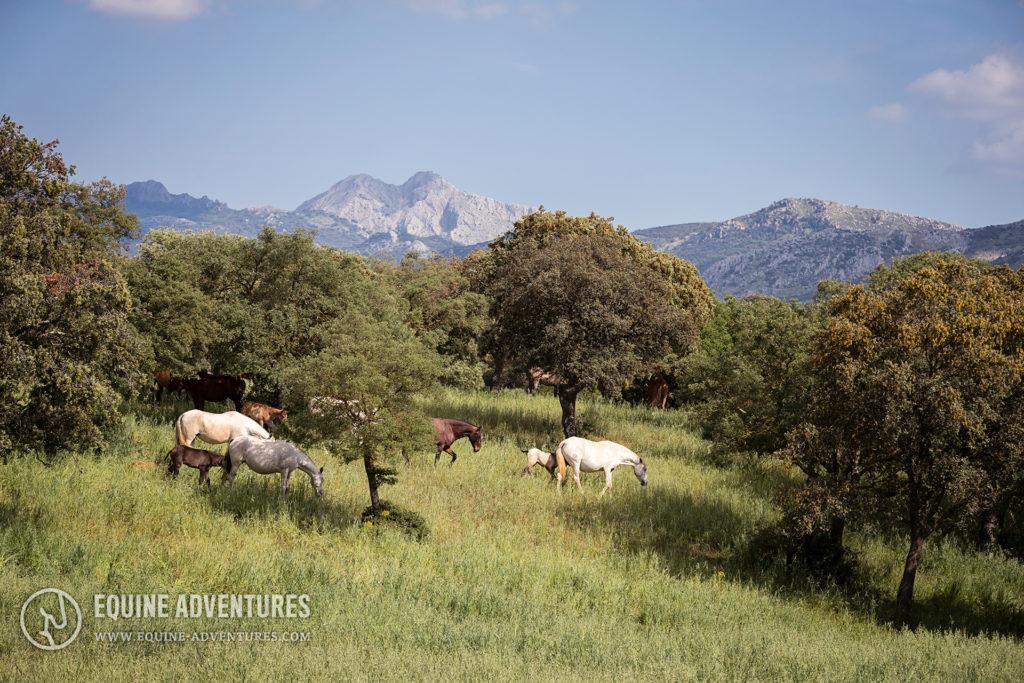 Stutenherde vor andalusischer Bergkulisse | #Fotoreise #Andalusien #Pferdefotografie