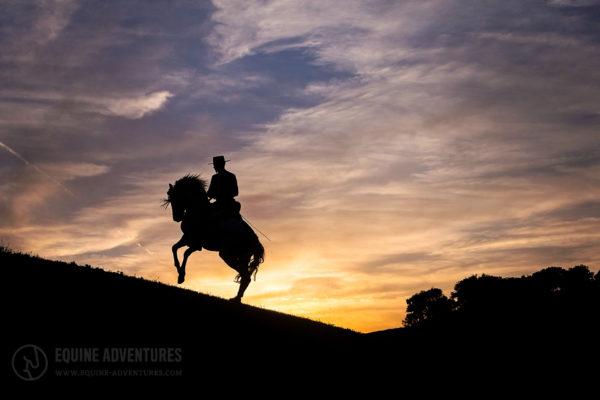 Pferd Galopp Silhouette